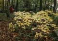 OT01 林道の秋