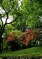 ON16 東照宮の新緑2