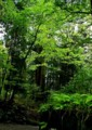 ON15 東照宮の新緑1