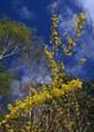 ON14 山間の春2