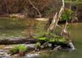 ON12 渓流に春が