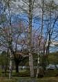 ON07 湖畔の春1