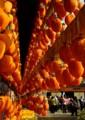 KO14群れる人柿