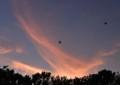 MN01 西の空