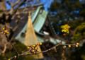 KO01高蔵寺と蝋梅