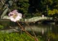 YK01 秋の薬師池
