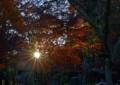 FF15 夕日の恵み