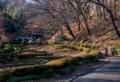 YP16 薬師池公園