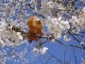桜&らいおんちゃん