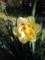 [庭の花]