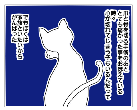 f:id:sangoruka_cats:20171102024136p:plain