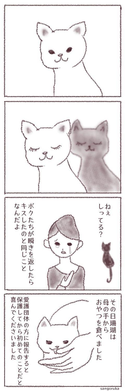 f:id:sangoruka_cats:20171103143317j:plain