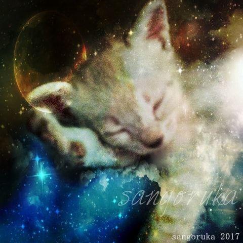 f:id:sangoruka_cats:20171105214119j:plain