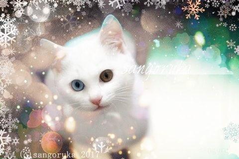 f:id:sangoruka_cats:20171105214121j:plain