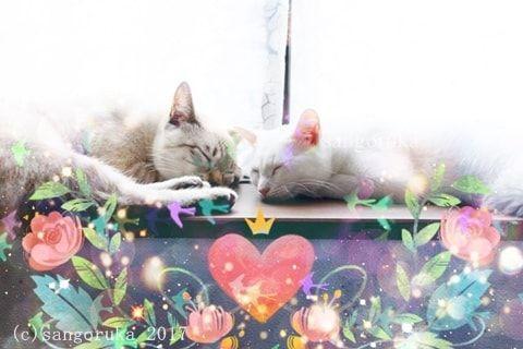 f:id:sangoruka_cats:20171105214122j:plain