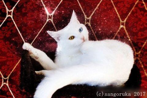 f:id:sangoruka_cats:20171105214123j:plain