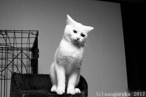 f:id:sangoruka_cats:20171105214124j:plain