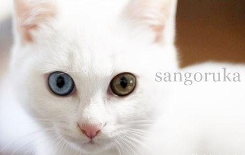 f:id:sangoruka_cats:20171105214128j:plain