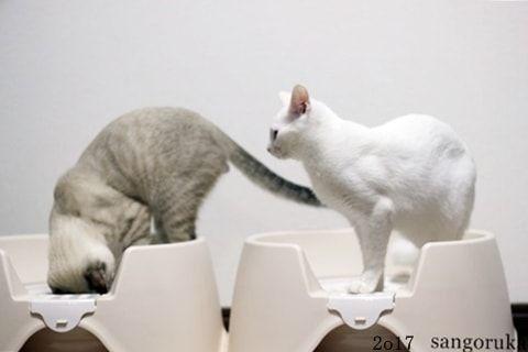 f:id:sangoruka_cats:20171105215259j:plain