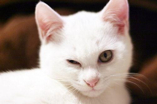 f:id:sangoruka_cats:20171106001915j:plain