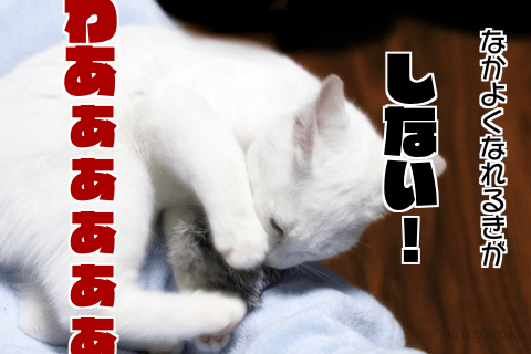 f:id:sangoruka_cats:20171106001919p:plain