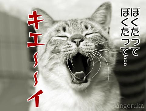 f:id:sangoruka_cats:20171106013717p:plain