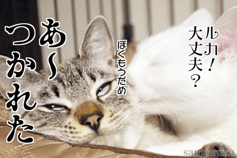 f:id:sangoruka_cats:20171106013718p:plain