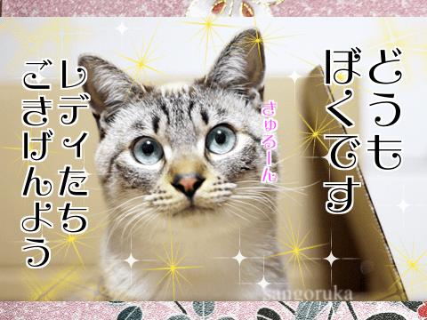 f:id:sangoruka_cats:20171106013720p:plain