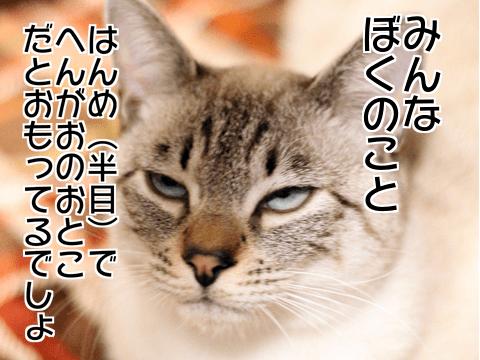 f:id:sangoruka_cats:20171106013721p:plain