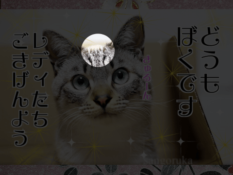 f:id:sangoruka_cats:20171106013723p:plain