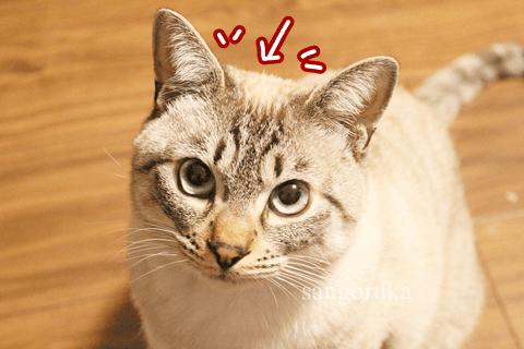 f:id:sangoruka_cats:20171106013728p:plain