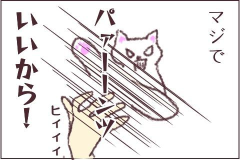 f:id:sangoruka_cats:20171106015534j:plain