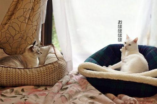 f:id:sangoruka_cats:20171106035717j:plain