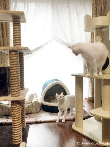 f:id:sangoruka_cats:20171106035718j:plain