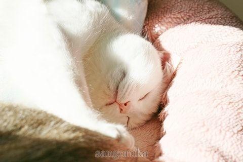 f:id:sangoruka_cats:20171106042430j:plain