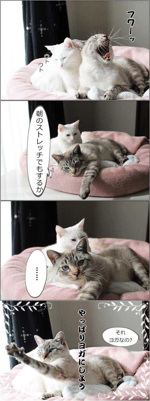 f:id:sangoruka_cats:20171106042431p:plain