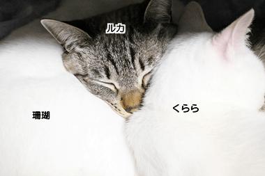 f:id:sangoruka_cats:20171106042433p:plain