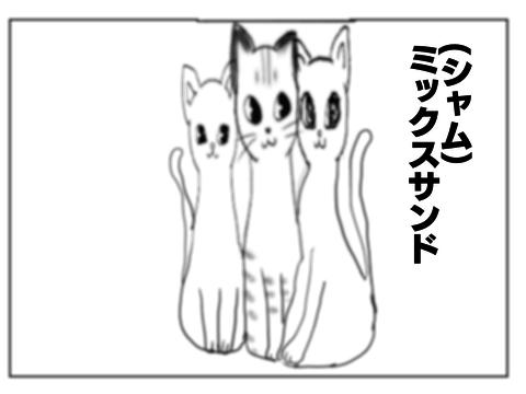 f:id:sangoruka_cats:20171106042434p:plain