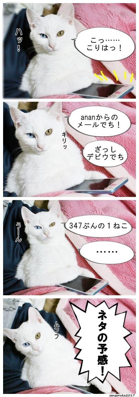 f:id:sangoruka_cats:20171106044321j:plain