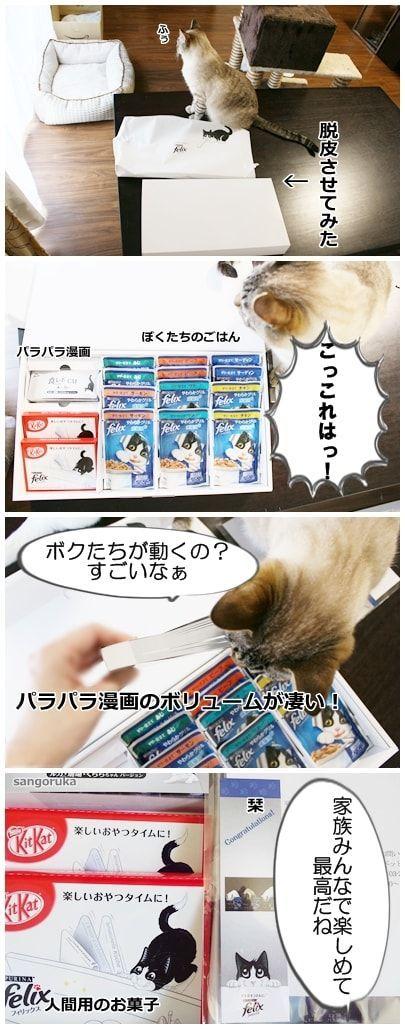 f:id:sangoruka_cats:20171106044323j:plain