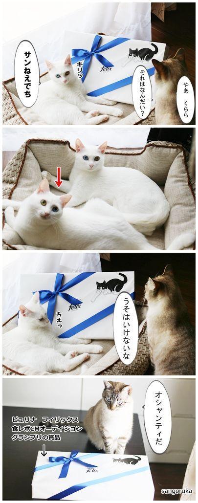 f:id:sangoruka_cats:20171106044325j:plain