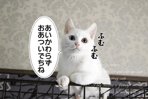 f:id:sangoruka_cats:20171106121606p:plain