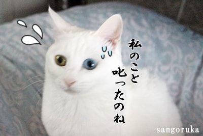 f:id:sangoruka_cats:20171106123155j:plain