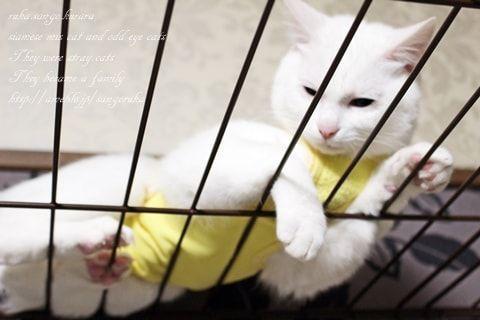 f:id:sangoruka_cats:20171106130726j:plain