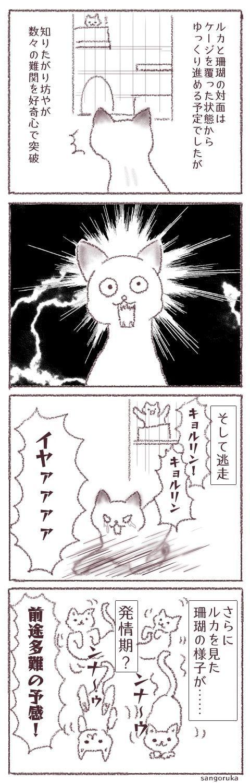 f:id:sangoruka_cats:20171106173040j:plain
