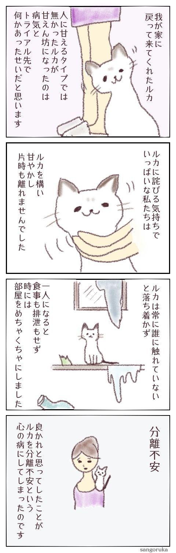 f:id:sangoruka_cats:20171106194047j:plain