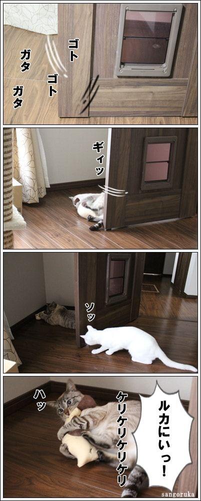 f:id:sangoruka_cats:20171107000033j:plain