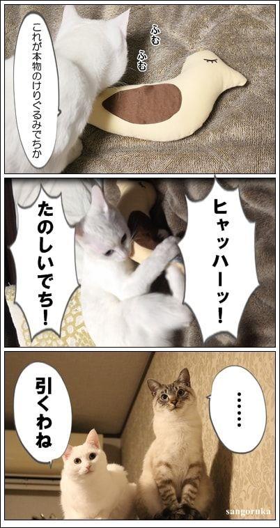 f:id:sangoruka_cats:20171107000034j:plain