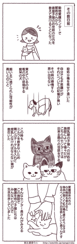 f:id:sangoruka_cats:20171107144022p:plain