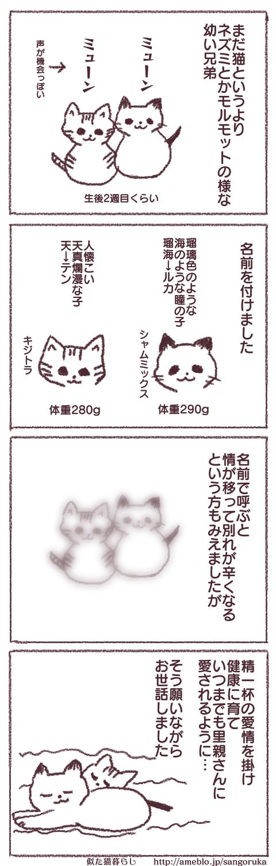 f:id:sangoruka_cats:20171107144029p:plain